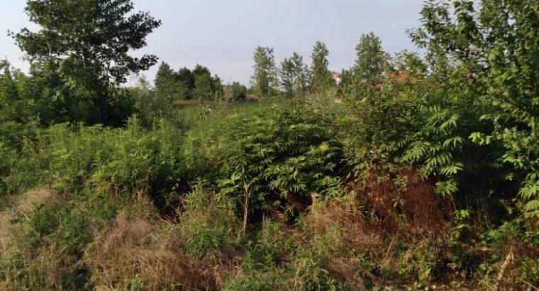 زمین روستایی مسکونی با سند تک برگ و پروانه ساخت